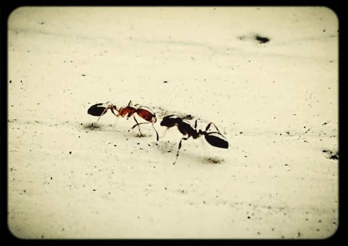 Halloo.... nice to meet you ?? Ants Taking Photos Eyeem Fauna Mizz Nunuy EyeEm Bugs