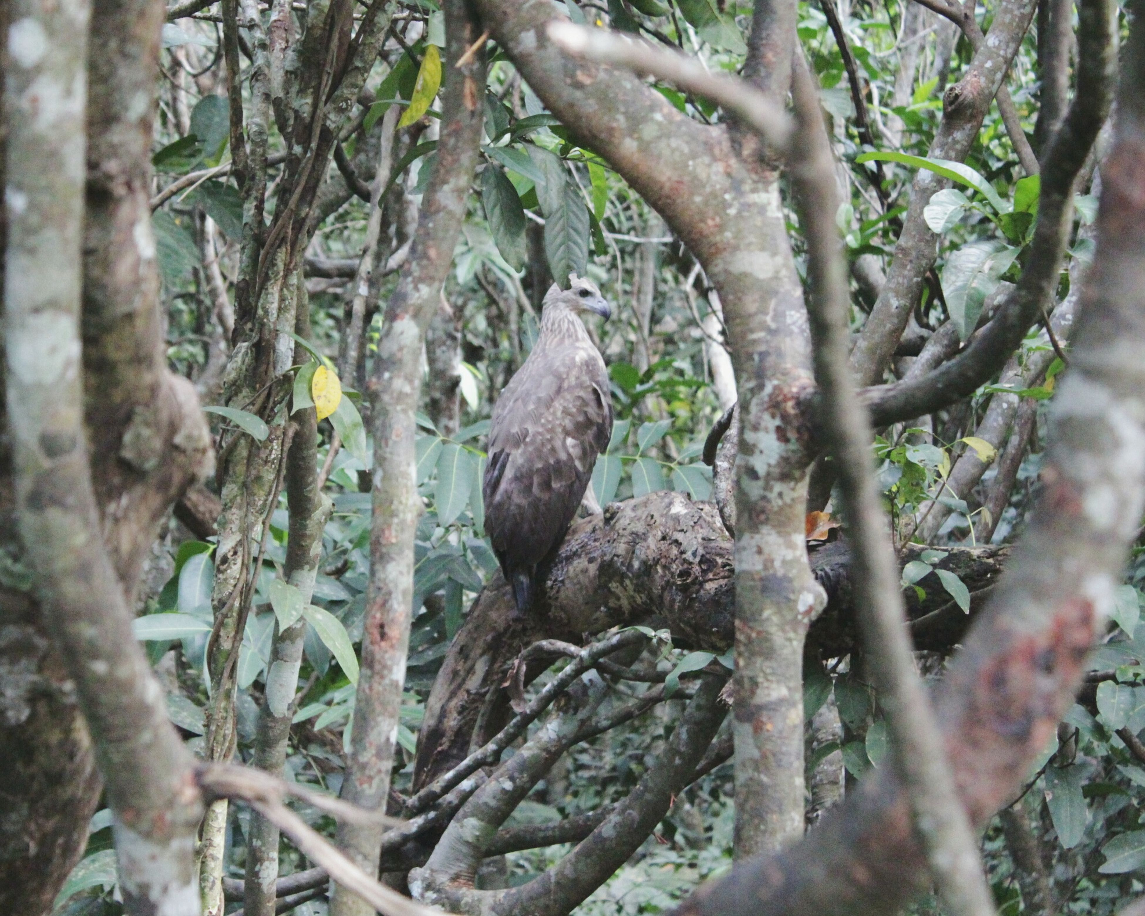 Animal Birds Eagle Nature Forest Photography Canon650d Beauty In Nature INDONESIA Southborneo Banjarmasin