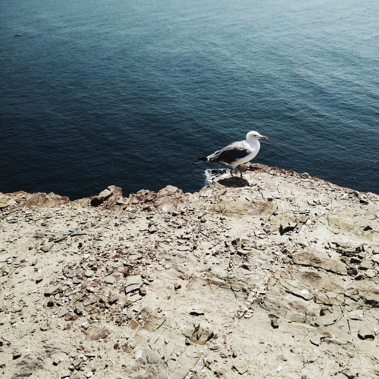 animal themes, one animal, water, bird, high angle view, day, sea, nature, animals in the wild, seagull, no people, outdoors, perching, mammal, spread wings