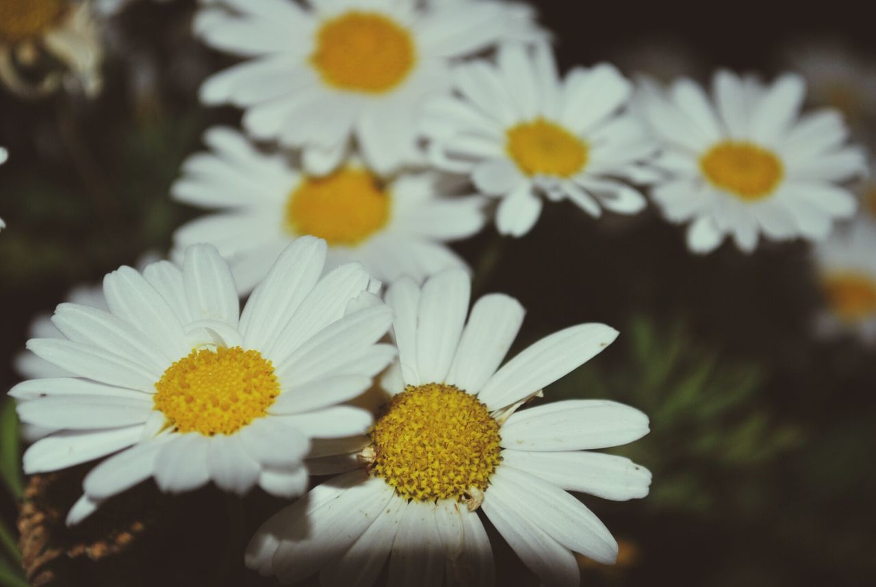 flower, yellow, petal, nature, flower head, growth, freshness, beauty in nature, blooming, fragility, close-up, no people, outdoors, day