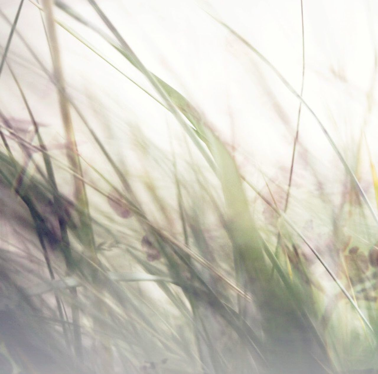 grass, nature, growth, plant, selective focus, no people, close-up, day, field, outdoors, beauty in nature, tranquility, backgrounds, freshness