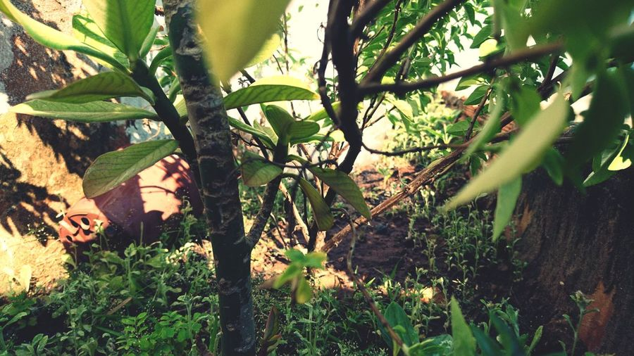 Tree Growth Today's Hot Look Ground Level View Plants In Contact With Nature Picoftheday Different Colors EyeEm Gallery Beautiful Nature Taking Photos Simple Photography Good Morning Goodday