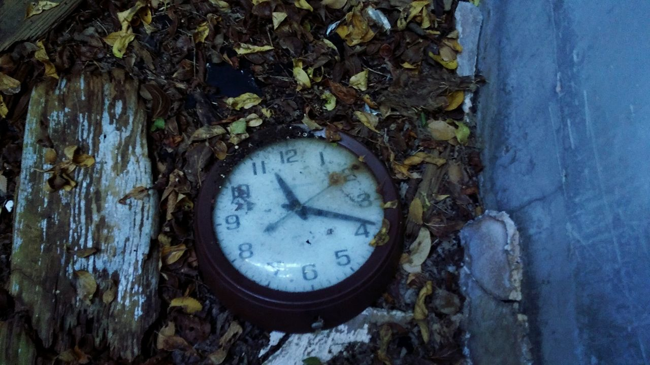 leaf, no people, abandoned, day, nature, close-up, outdoors, gauge