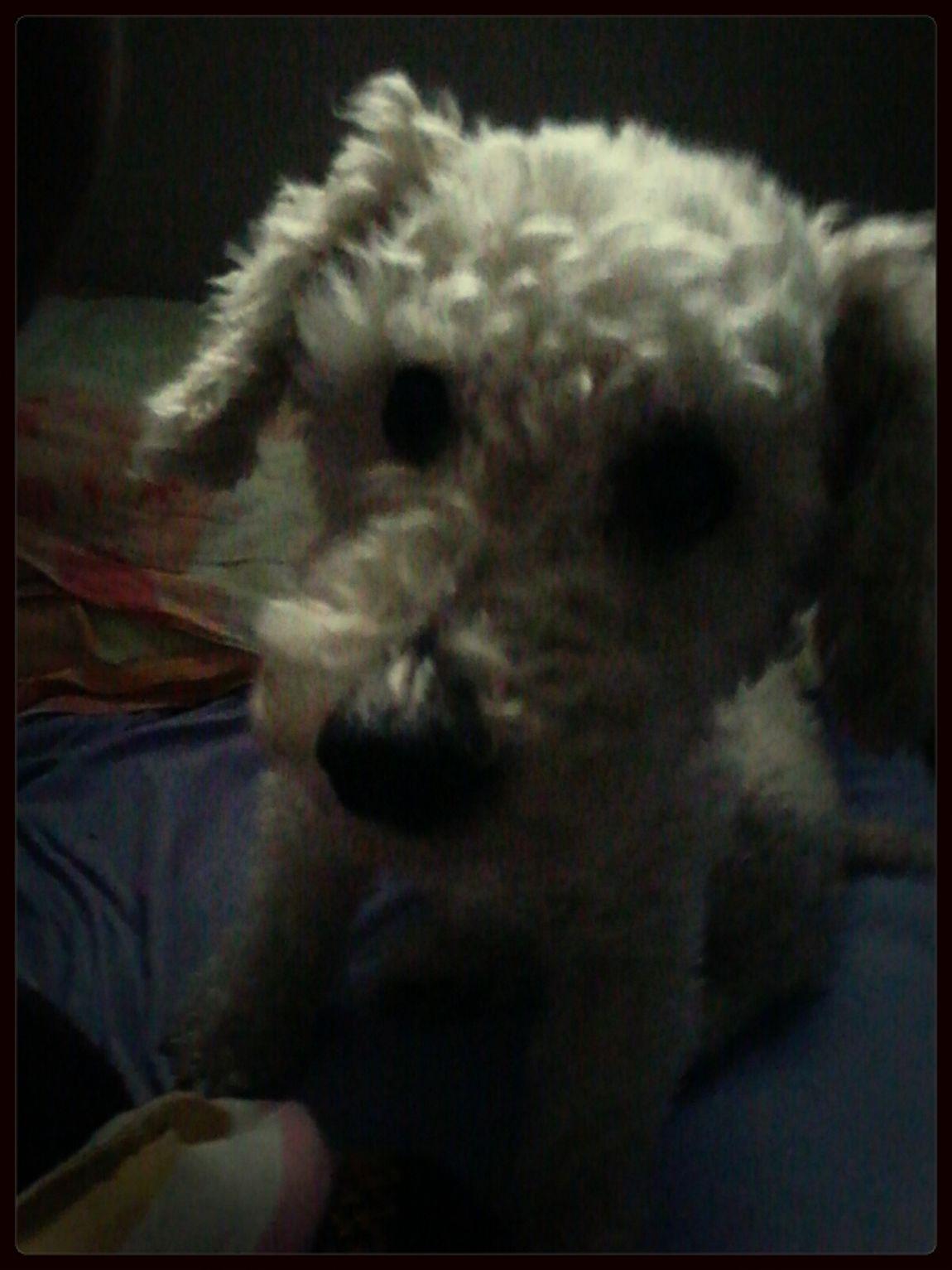 good morning guys I Love My Dog!  Hello World
