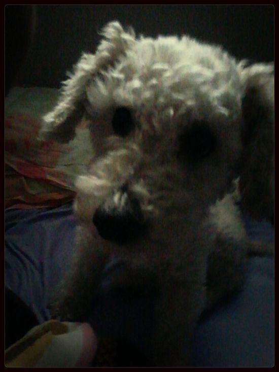 good morning guys I Love My Dog!  Hello World First Eyeem Photo
