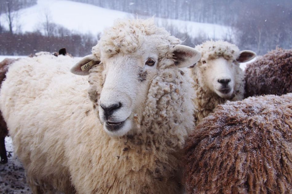 Beautiful stock photos of snow, Animal Themes, Close-Up, Cold Temperature, Day