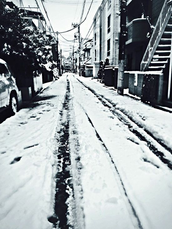 Hello World Snow ❄ Snow Day ❄ Cold Cold Winter ❄⛄ Nature Tokyo,Japan IPhoneography IPhone Photography