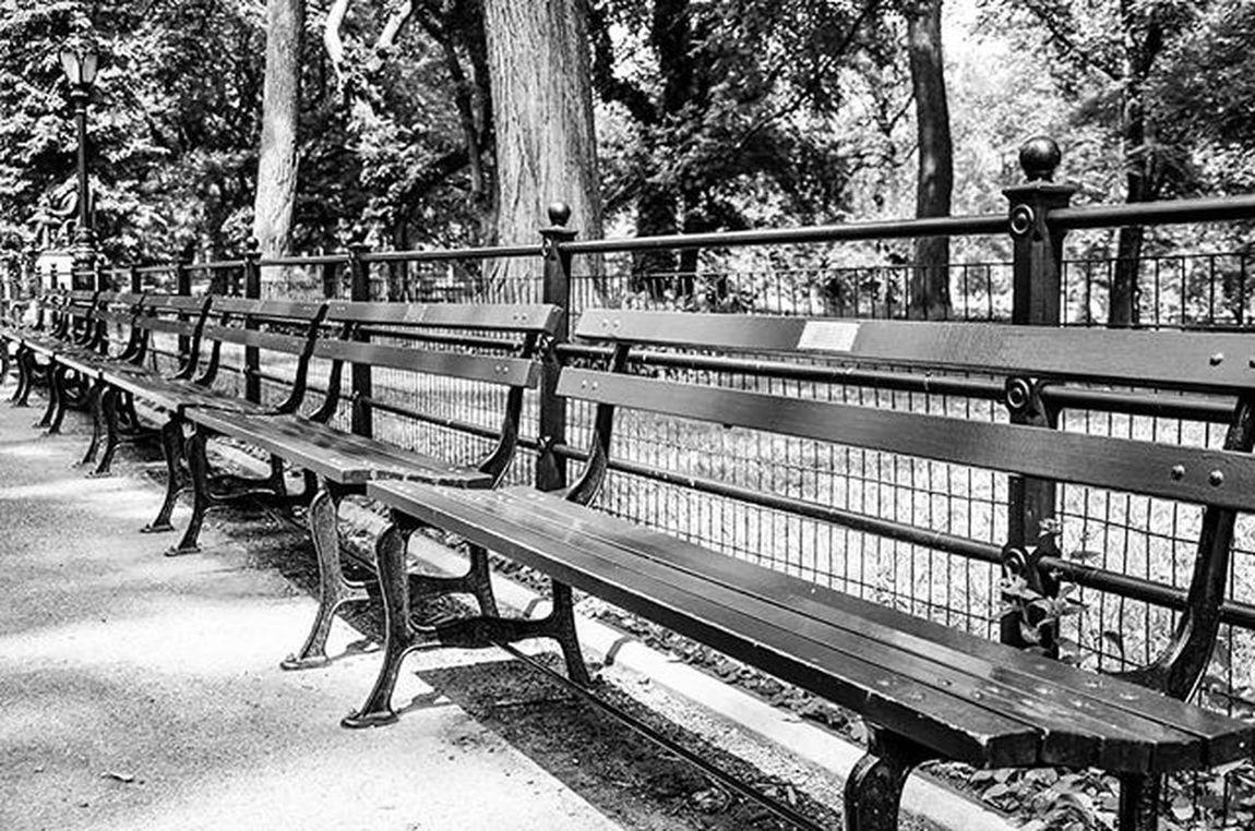 Central Park memorial benches. Third example Grammasters3 Blackandwhite CentralPark NYC Memories Reflections Newyork Traveltodaytv Travelphotography Photography Onlinenewyork Nycprimeshot