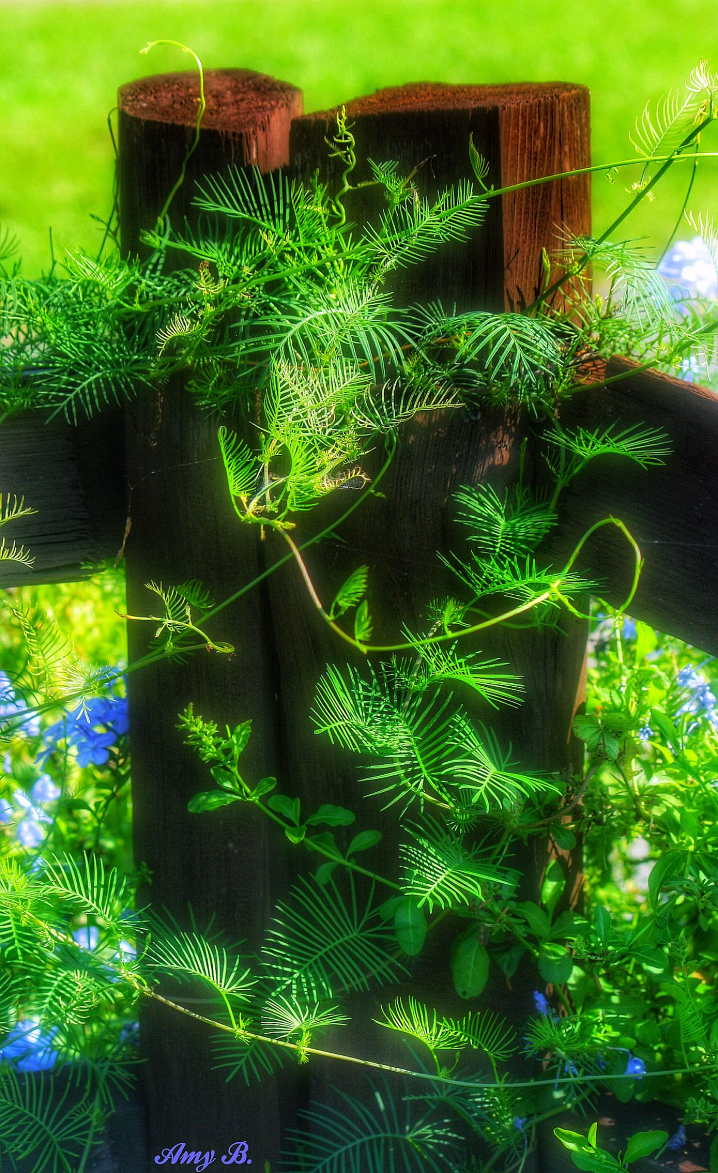 green color, tree, growth, nature, tree trunk, plant, tranquility, park - man made space, outdoors, day, no people, palm tree, branch, beauty in nature, green, field, wood - material, built structure, grass, fence