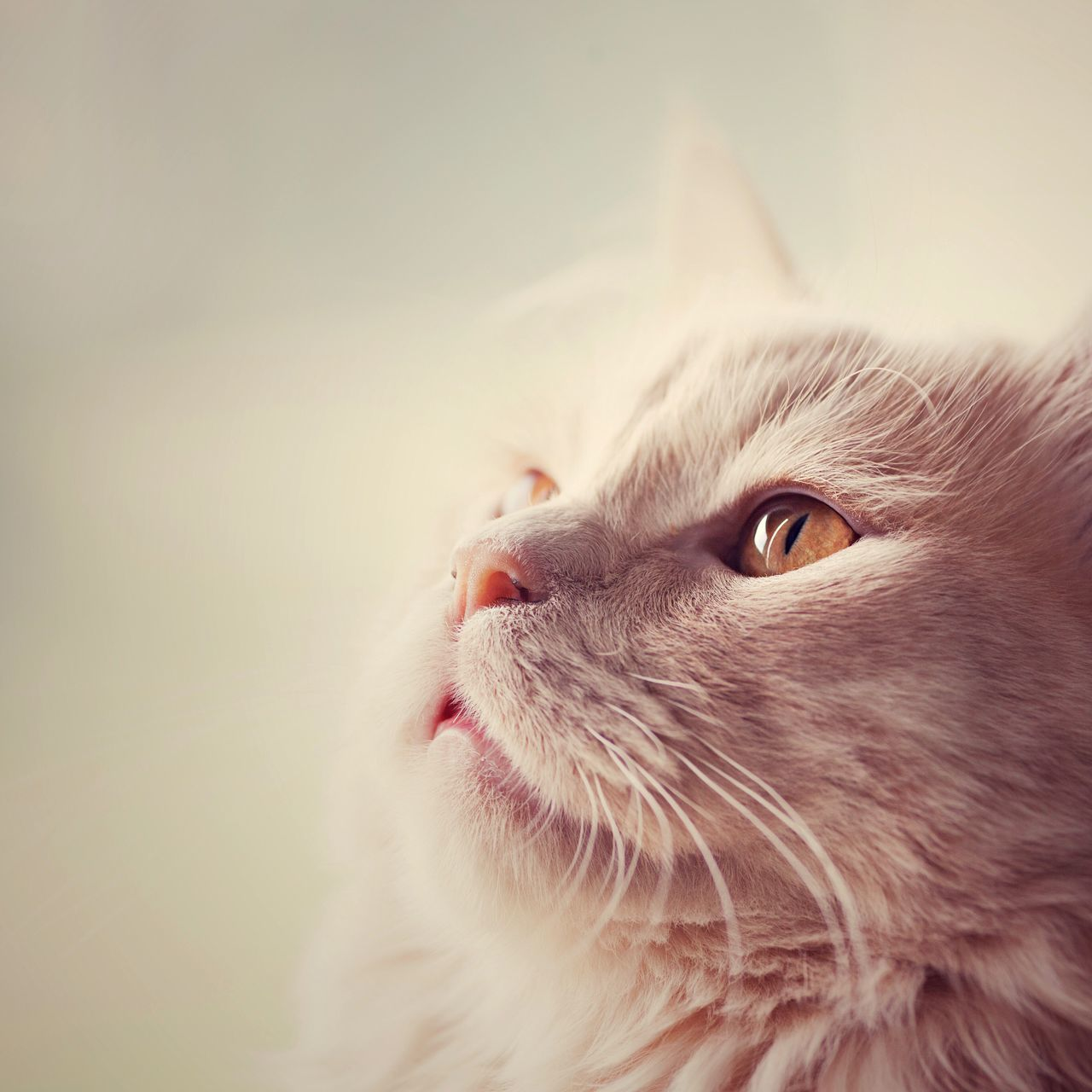 Beautiful stock photos of kreuz, Animal Themes, Cat, Close-Up, Domestic Animals