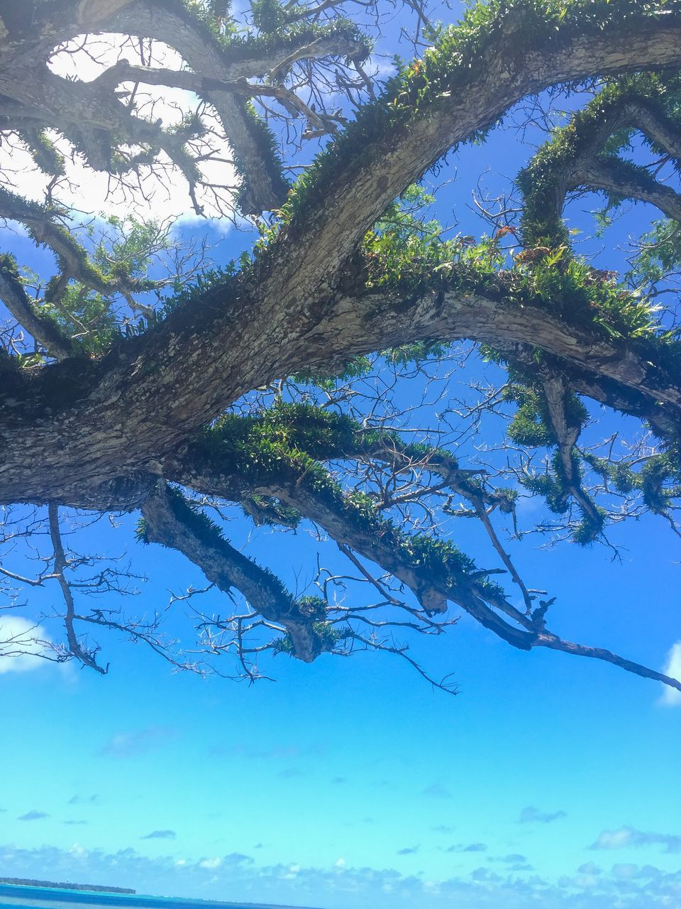 tree, nature, day, branch, low angle view, no people, beauty in nature, animals in the wild, tranquility, outdoors, growth, animal themes, one animal, tree trunk, scenics, water, sky
