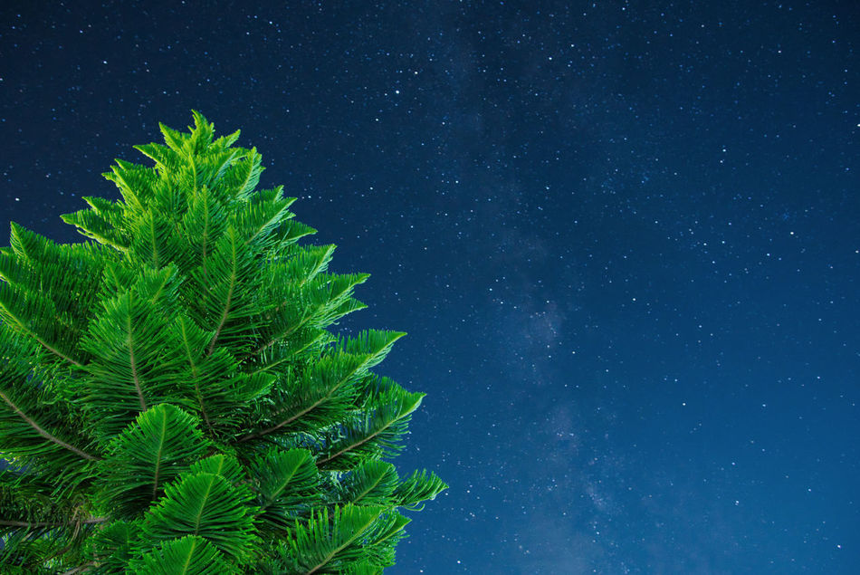 Astronomy Beauty In Nature Eye4photography  EyeEm Gallery Galaxy Green Color Growth Low Angle View Milky Way Nature Night No People Outdoors Pine Pine Tree Scenics Sky Star Star - Space Stars Tree