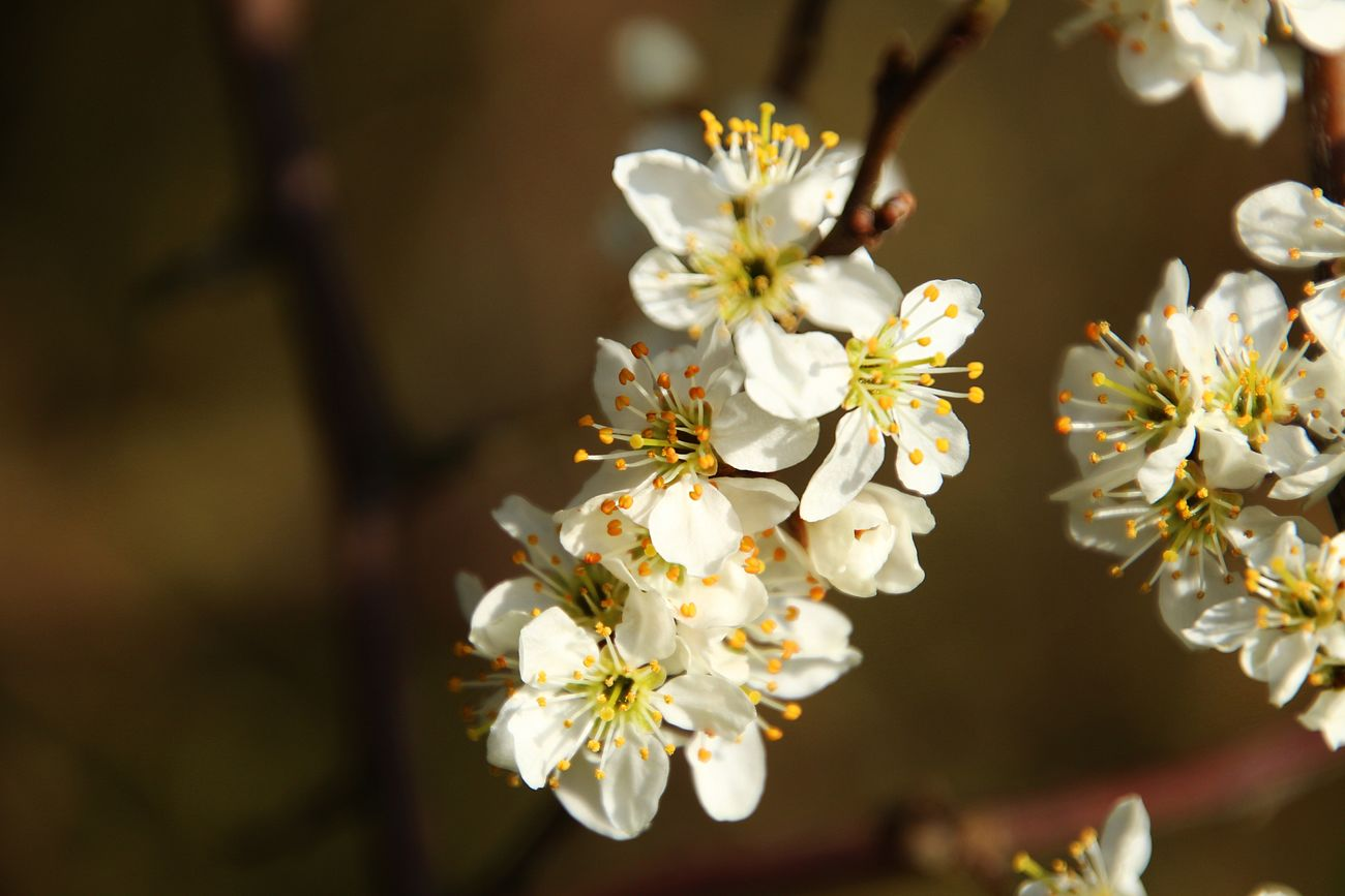 Flower Nature Beauty In Nature Growth Blossom Fragility No People Almond Tree Plant Close-up Outdoors Flower Head Freshness Day Eyem Best Shots Spring