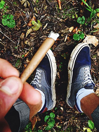 Smoke in the forest. Weed Forest Chilling Smoke