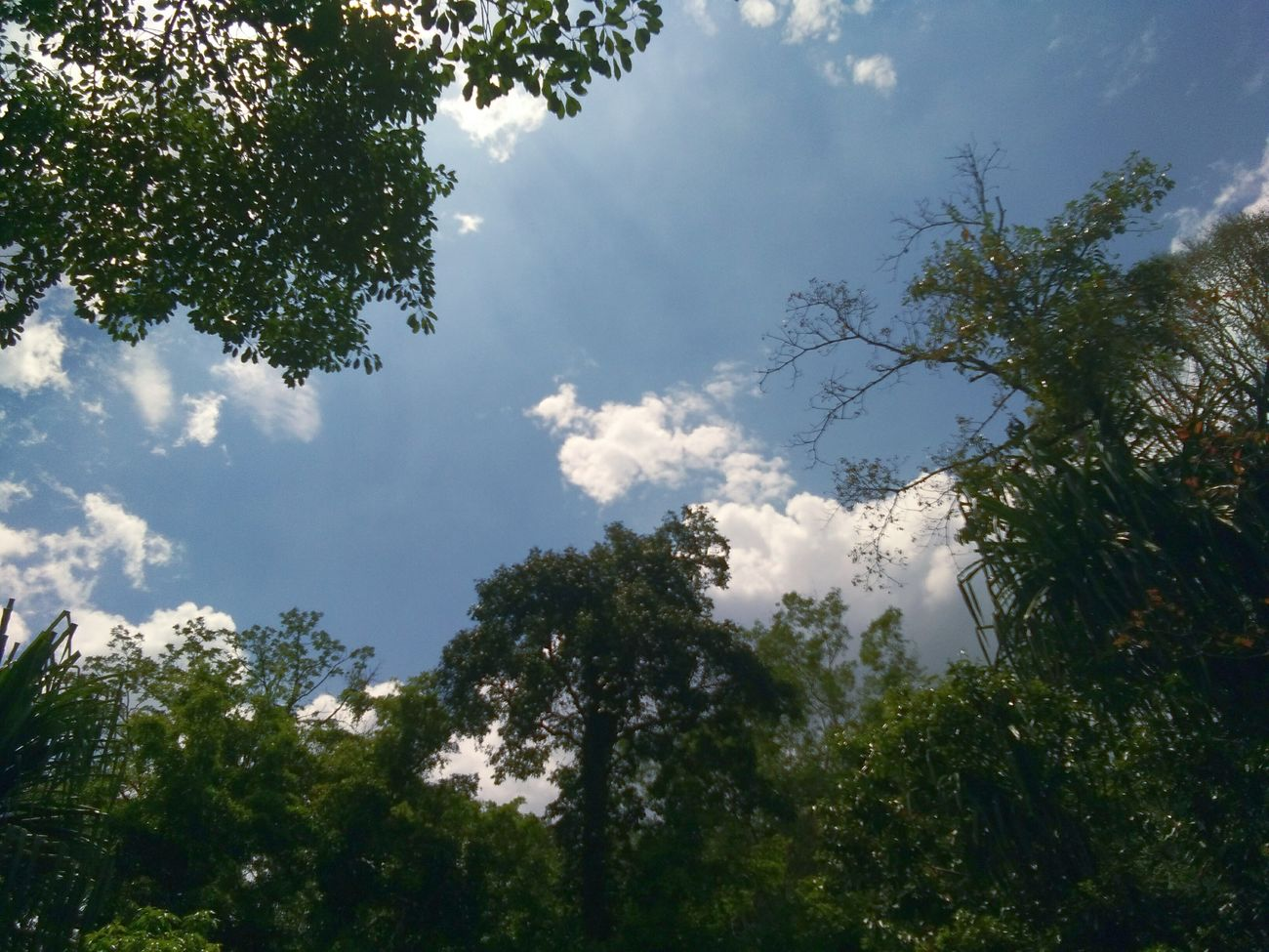 Tree Nature No People Sky Day Outdoors Enjoying Life Tree Nature Beautiful Nature_collection Clouds And Sky Taking Pictures Forest Relaxing
