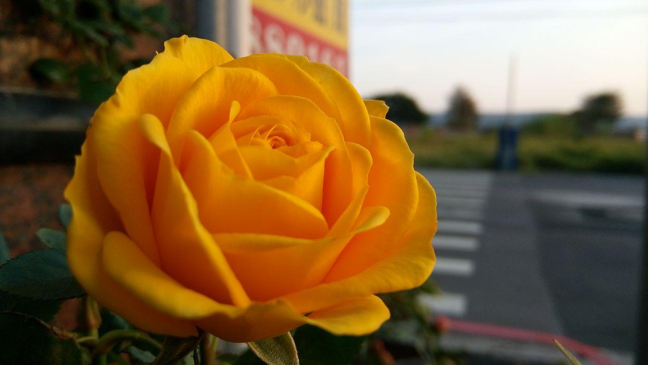 Mobilephotography Ezraphotography Ilovephotography C5 Ultra