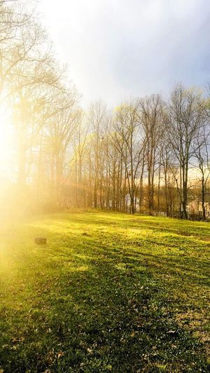 Light... Grass Tranquility Tranquil Scene Tree Scenics Landscape Beauty In Nature Bare Tree Field Green Color Grassy Sky Nature Park - Man Made Space Branch Day Non-urban Scene Sunbeam Lens Flare Grass Area