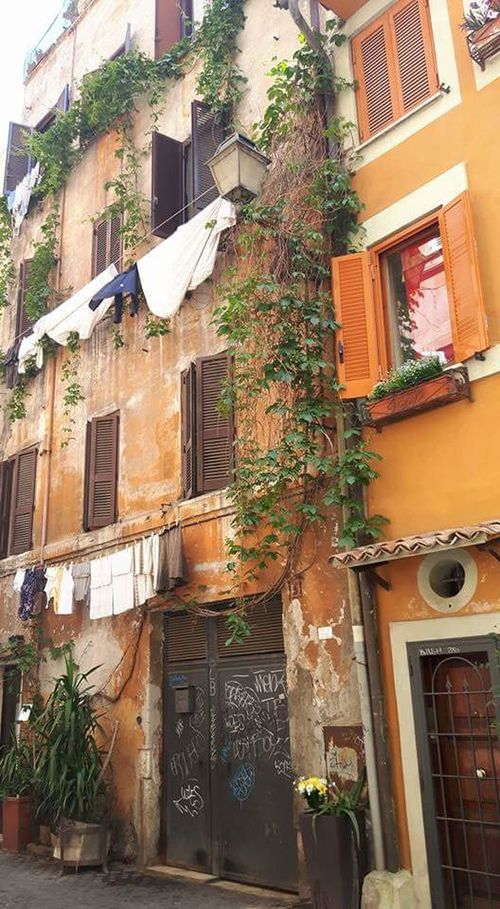 Building Exterior Architecture Built Structure Window Outdoors Day Residential Building Low Angle View No People Window Box Tree City Trastevere Rome, Italy
