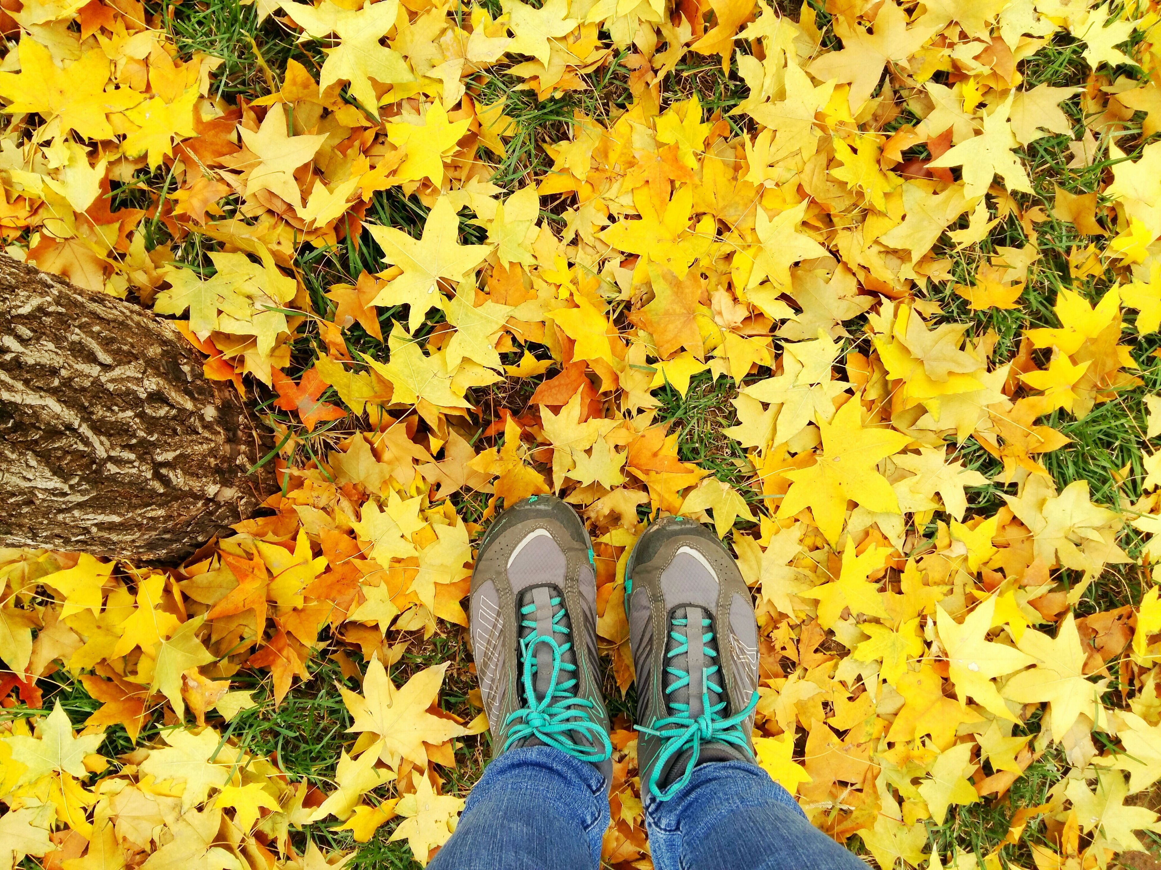 low section, person, shoe, personal perspective, autumn, standing, leaf, human foot, change, footwear, season, lifestyles, yellow, leaves, high angle view, unrecognizable person, jeans