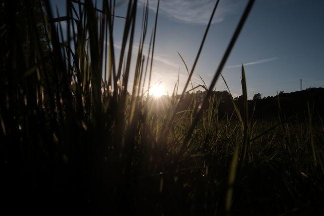 Taking Photos Good Evening Gokväll XF16mmF1.4 X-Shooter FUJIFILM X-T1 Sunset Solnedgång Sverige Enjoying Life