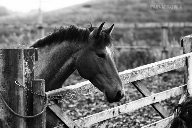 Beautiful Horse I Love Horses Mare ❤ Fence Gate This Morning Check This Out Hello World Relaxing Hi! Enjoying Life