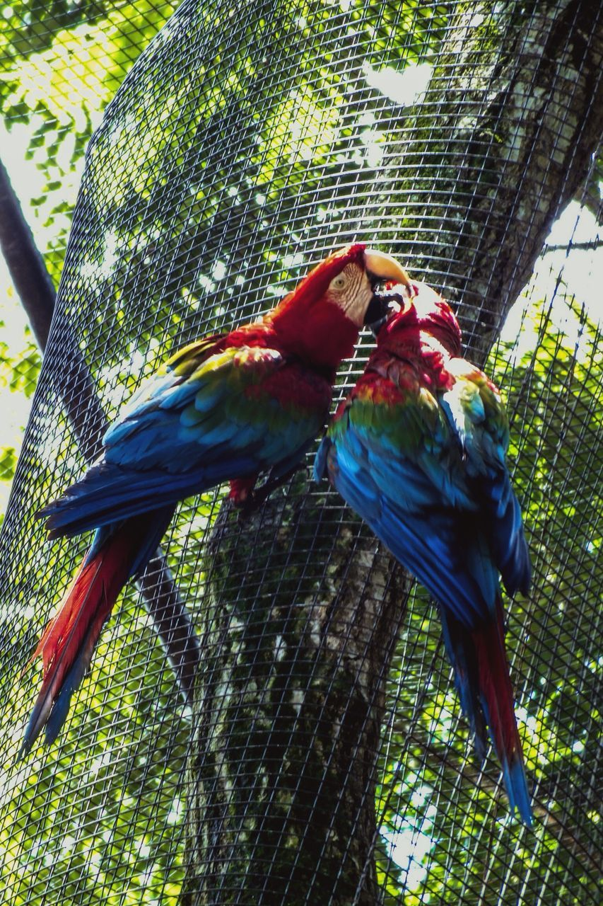 Close-Up Side View Of Parrots Against Plants