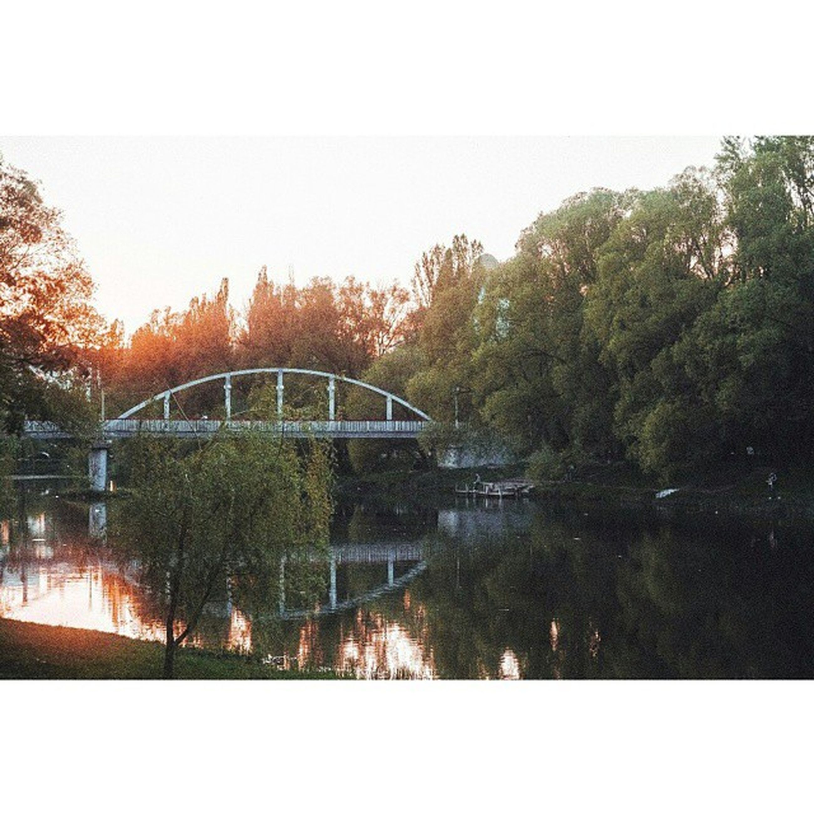 tree, water, reflection, bridge - man made structure, connection, built structure, architecture, river, transfer print, bridge, arch bridge, clear sky, auto post production filter, sky, lake, waterfront, tranquility, nature, canal, arch
