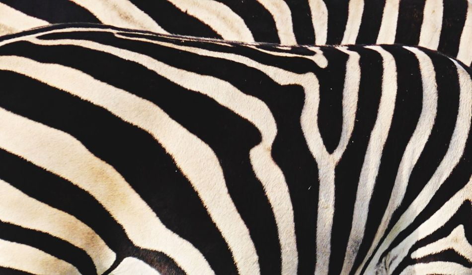 Beautiful stock photos of zebra, Animal Body Part, Animal Markings, Animal Themes, Animals In The Wild