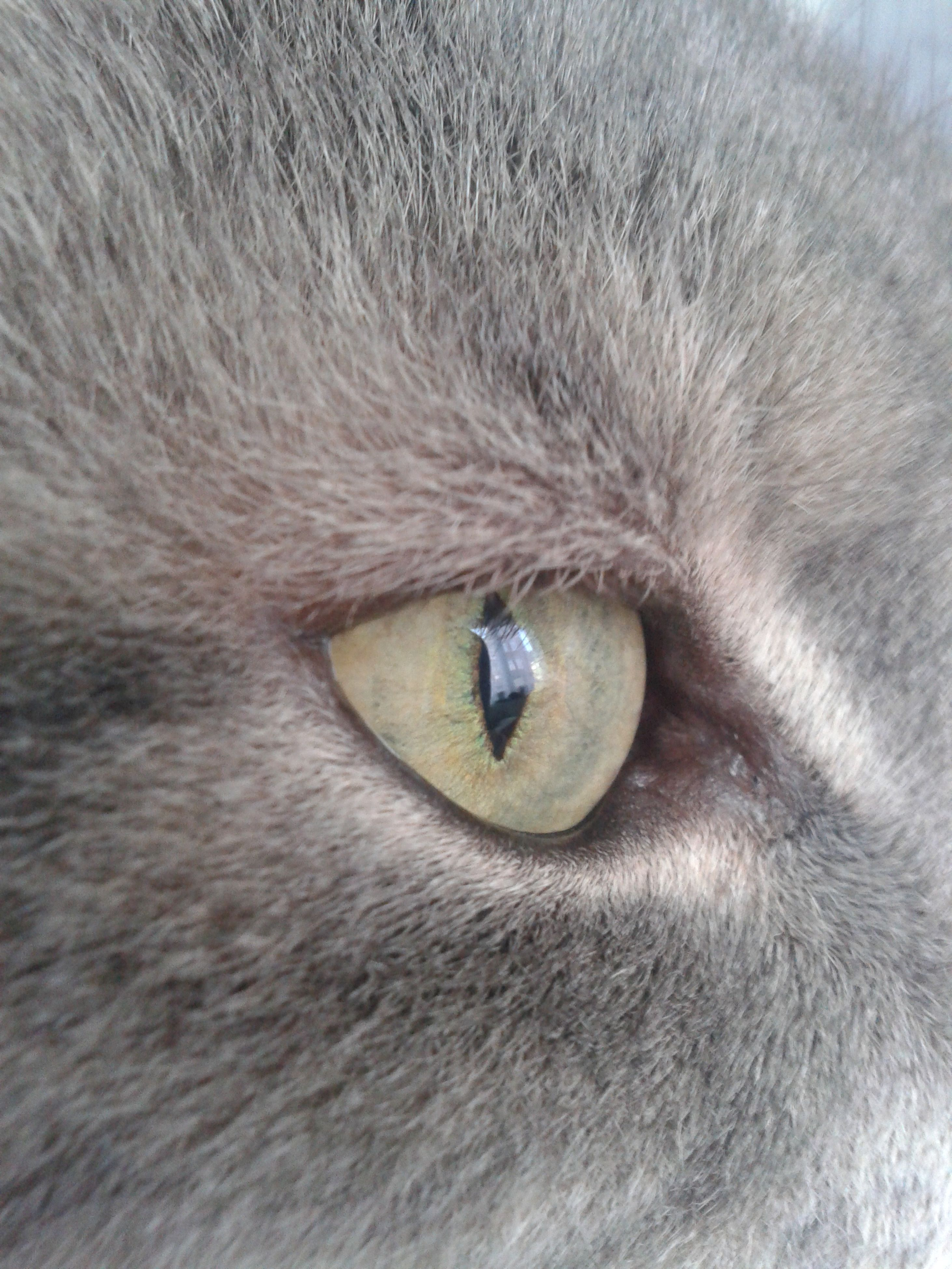 one animal, animal themes, pets, domestic animals, domestic cat, animal head, cat, animal body part, mammal, close-up, animal eye, feline, whisker, animal hair, part of, full frame, portrait, zoology, looking away, backgrounds