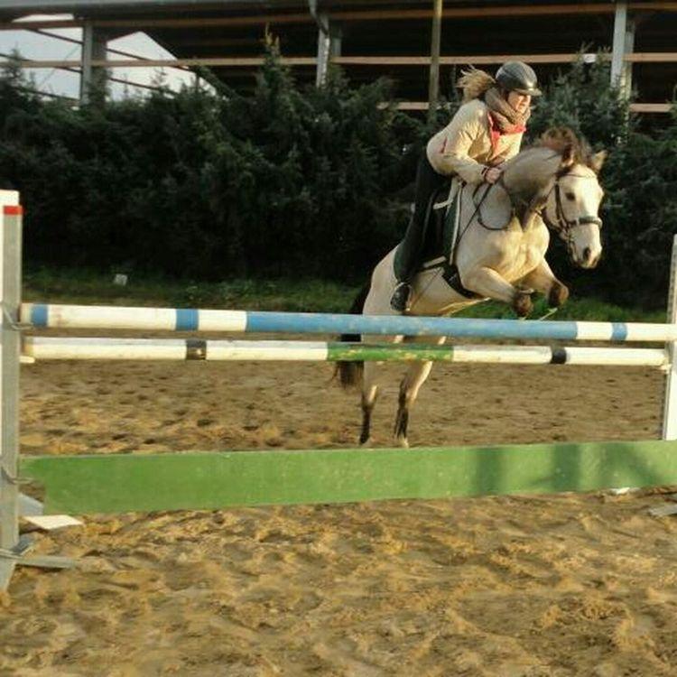 Horse Riding My Horse Horse Jumping Connemarapony