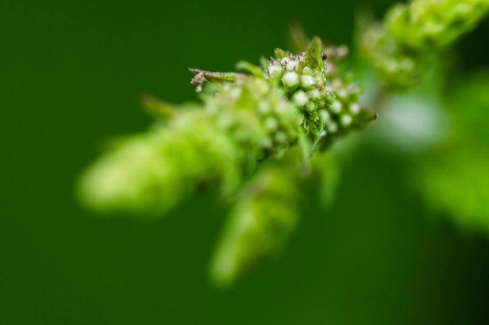 Beautiful stock photos of macro, Close-Up, Day, Fragility, Freshness