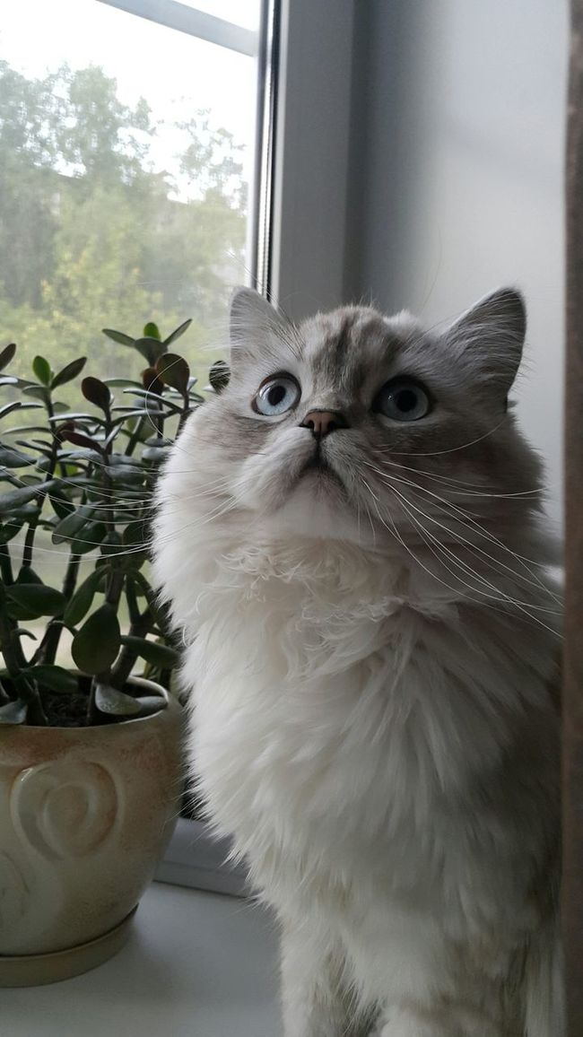 Ma Cat...his Name...Gess
