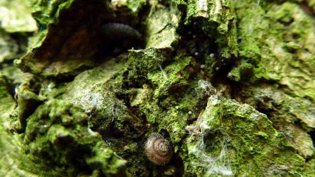 Bark Beauty In Nature Close-up Detail Fungus Green Color Isopod Microcosm Moss Nature No People Outdoors Rough Snail