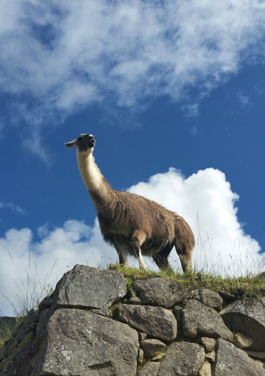Low Angle View Of Animal On Rocks Against Sky