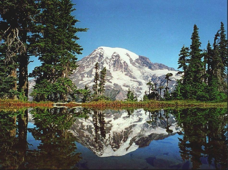Landscape Mont Rainier Nationalpark United States
