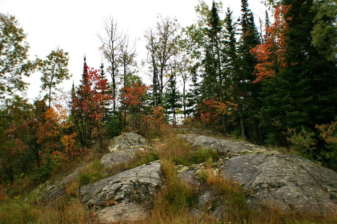 Stoney Ground Upper Peninsula Michigan Autumn Colors Rocks Red Leaves, Autume, Season Change
