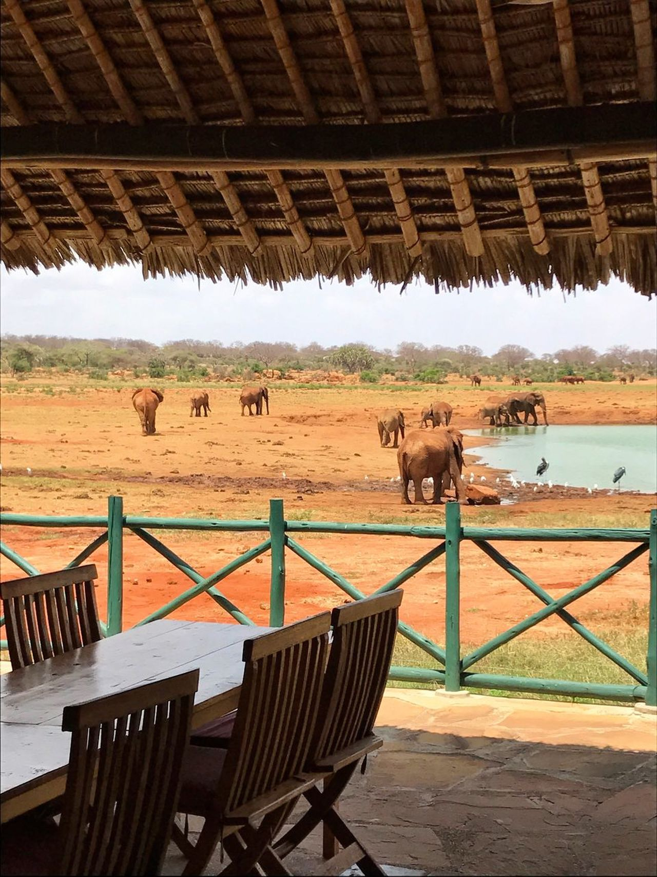 Animal Themes Water Large Group Of Animals Togetherness Elephants Waterhole Elephant Safari Animals Amboseli African Beauty Freedom Animals In The Wild Savannah Africa Safari Scenics Kenya Landscape African Lodge Lodge Tranquil Scene Nature