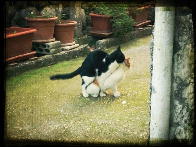 #cat #cute #love