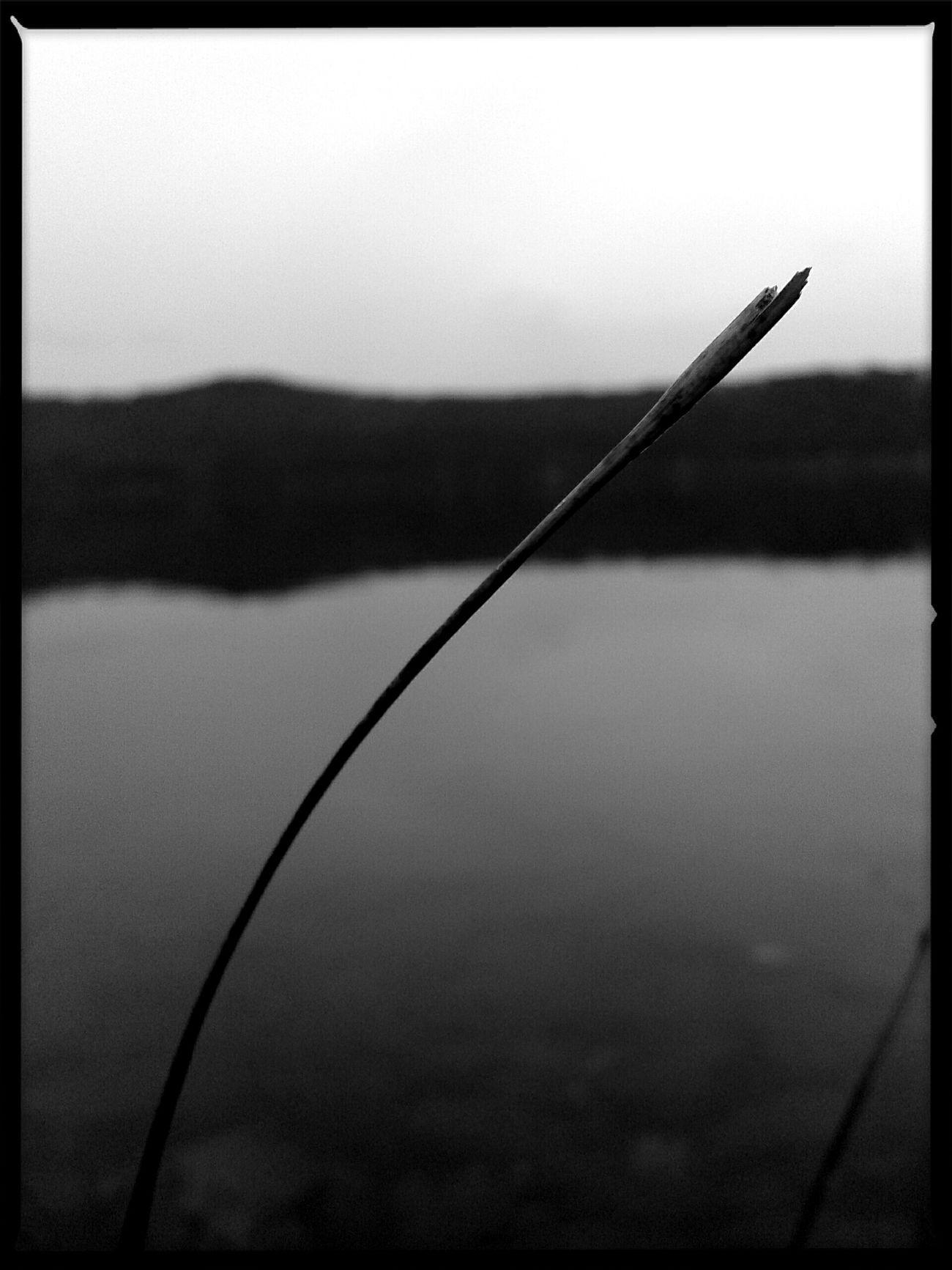 Lago Di Albano Monochrome Blackandwhite Black & White EyeEm Best Shots EyeEm Nature Lover Eyemphotography EyeEm Best Shots - Black + White Italy Open Edit
