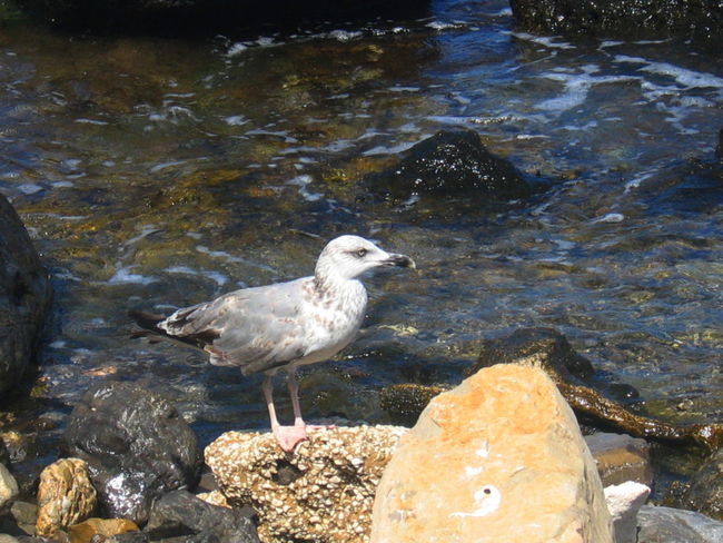 Bird Day Marettimo Island No People One Animal Outdoors Sea Seagull Sicily, Italy Stones & Water Water