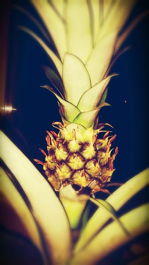 ForTheLoveOfPhotography ForTheLoveOfNature Plants AndroidPhotography Itsgrowing Eyemnaturelover Pineapple Pineappleplant Babypineapple