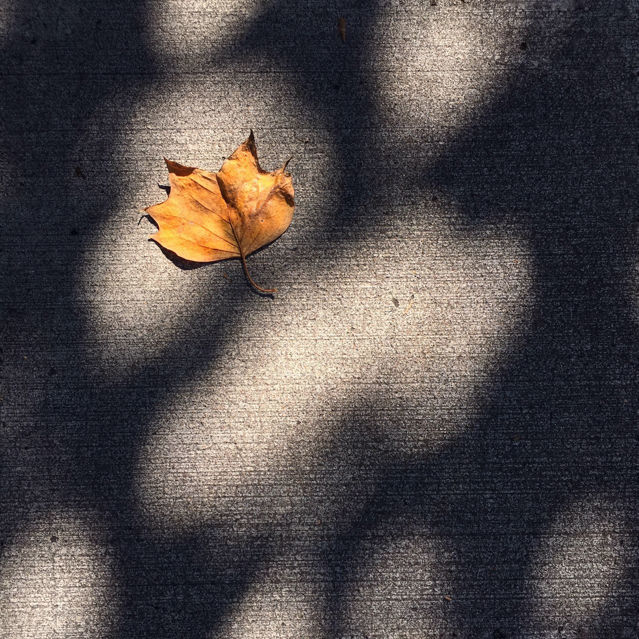 Leaf Yellow Leaf Sunlight On Leaf Light And Shadow Sunlight And Shadow Autumn Autumn Leaf Golden Leaf Nature Minimalist Rule Of Thirds Eye Em Best Shots IPhone Photography Week On Eyeem