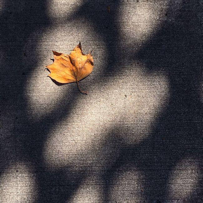 Leaf Yellow Leaf Sunlight On Leaf Light And Shadow Sunlight And Shadow Autumn Autumn Leaf Golden Leaf Nature Minimalist Rule Of Thirds Eye Em Best Shots IPhone Photography Week On Eyeem