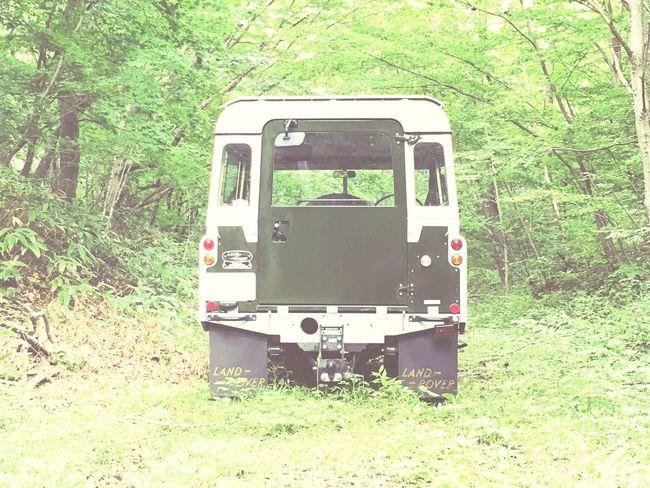 後ろ姿は、 Land Rover Defender と見た目が殆ど同じですね( ´ ▽ ` )ノ Landrover  Land Rover Land Rover Series LAND ROVER SERIES 2 Forest Forest Road Autumn Miyagi Kawasaki Town ZAO