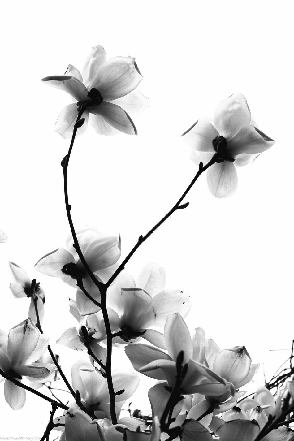 South Korea Blackandwhite Photography Spring Into Spring Sonya7II Seoul EyeEm Best Shots Flower Flower Collection Eye4photography  Sonyphotography
