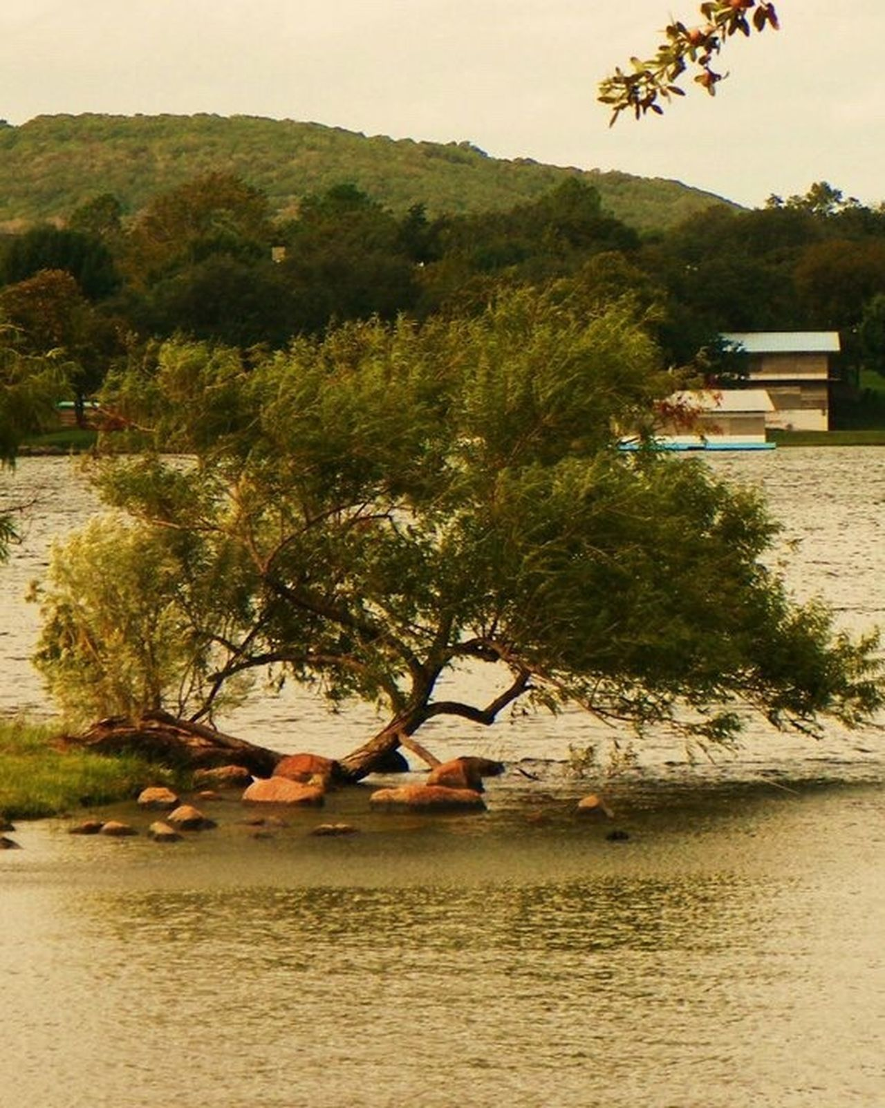 Outdoor Photography Wildlife & Nature Nature Texas White Rock Lake Dallas Enjoying Life No One Around Scerene Still Life Art Tree Water Sunset Pond