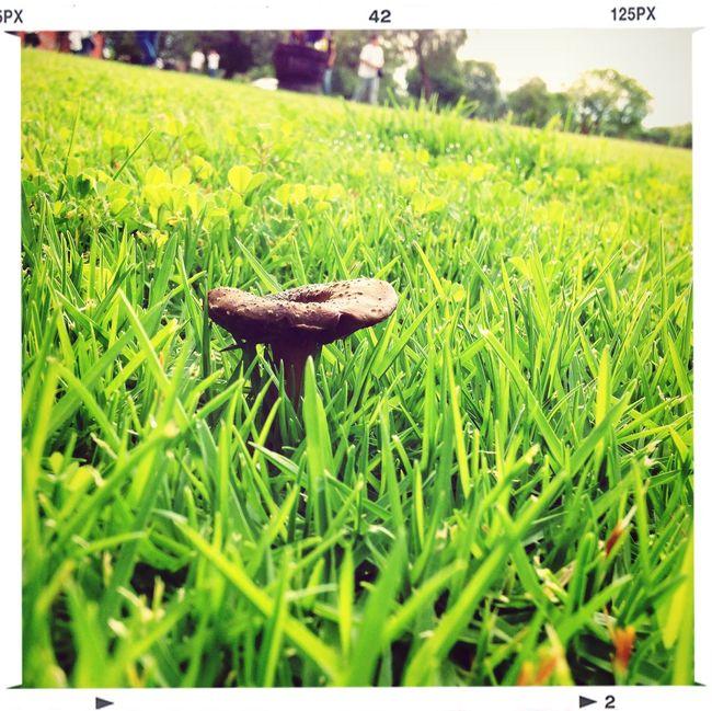 De esas imágenes que no todos los días nos encontramos Enjoying The Sun Grass Green