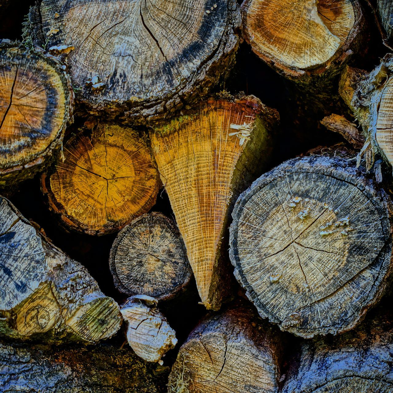 Wood Nature_collection Nature EyeEm Best Shots - Nature Everything In Its Place