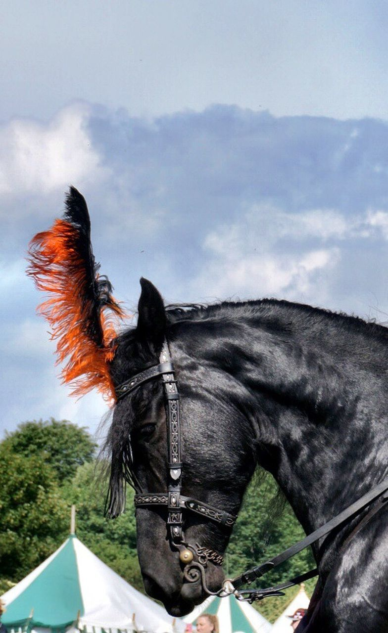 domestic animals, horse, animal themes, one animal, sky, mammal, cloud - sky, no people, day, outdoors, tree, close-up