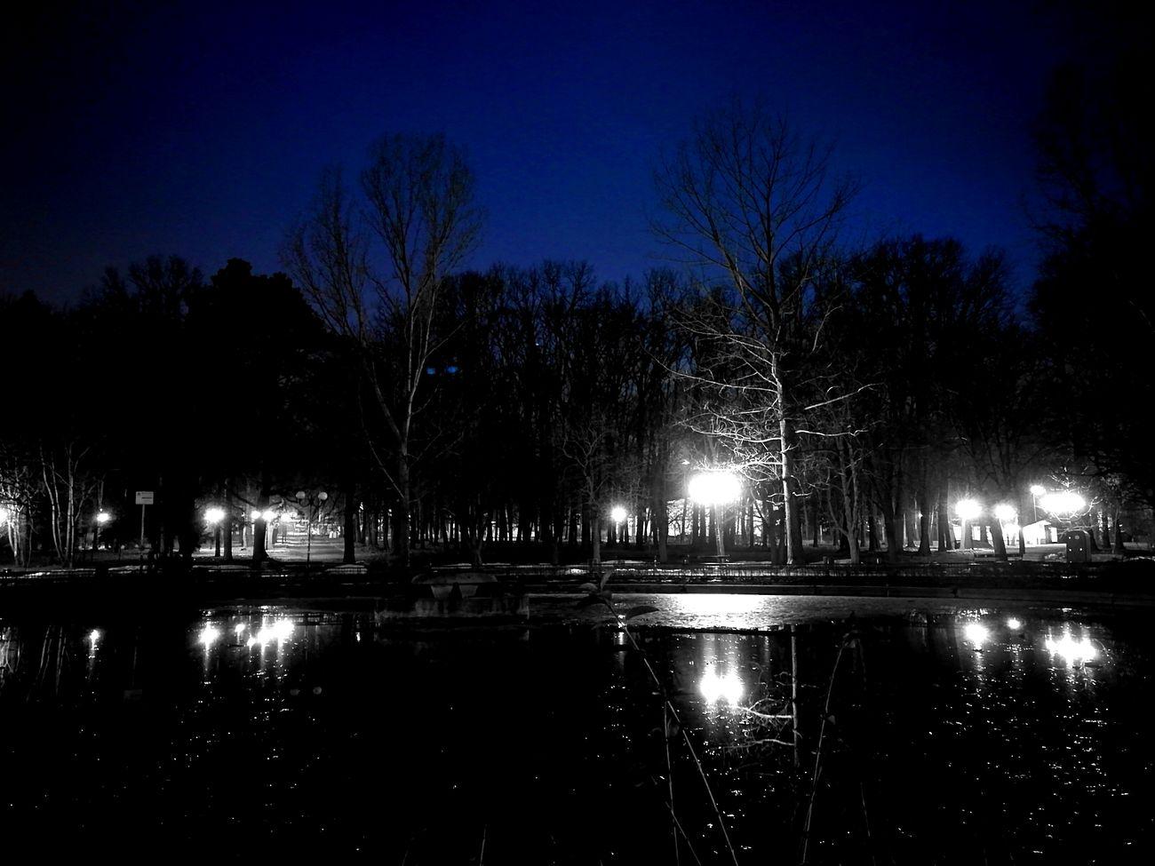Night Tree Outdoors Борисова градина Sofia, Bulgaria Night Lights Nightphotography Borisova Borisovagradina Nature Experiment Nightsky